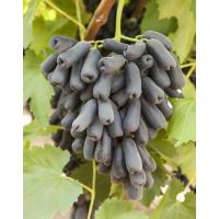 Виноград Аватар (Средний/Черный)