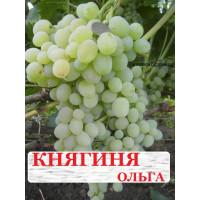 Виноград Княгиня Ольга (Ранний/Белый)